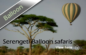 Honeymoon Wildlife Safaris Baloon Safaris